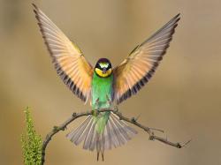 Beautiful Birds Green Bird Opening Wings Wallpaper #110374 - Resolution 1024x768 px