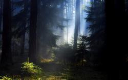 Beautiful Black Forest Wallpaper