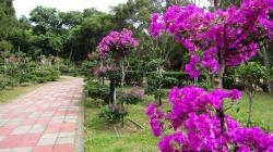 Beautiful Bougainvillea Hd Desktop Background HD wallpapers