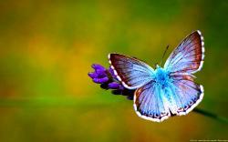 Beautiful Butterfly HD Wallpaper