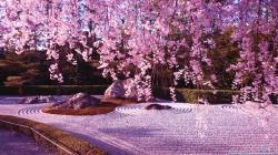 Beautiful Cherry Blossom Wallpaper