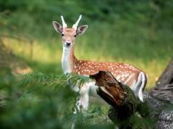 beautiful brown deer cute deer photo deer head wallpaper