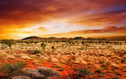 Desert Vegetation HD wallpapers