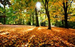 Beautiful Fallen Leaves Wallpaper