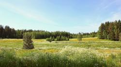 Beautiful Field wallpaper
