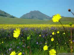 Wallpaper: Beautiful flower field wallpapers