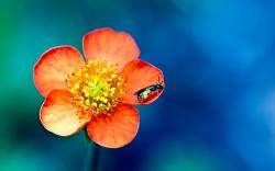 Flower Macro Photography 3 31120 HD Images Wallpapers