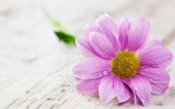Beautiful flower HQ Wallpaper