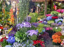 Wallpaper: Home beautiful flower garden wallpapers