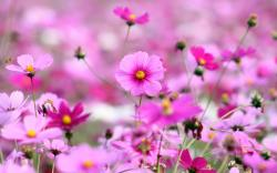 Beautiful Flowers Pictures