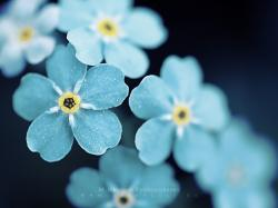 Blue Flowers. Available in the following size(s): ...