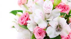 Beautiful Flowers Hd Background Wallpaper 28 Thumb