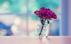 Glass Vase Beautiful Flowers HD Wallpaper