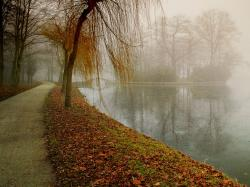 Beautiful Fog Nature Tree Water Favim