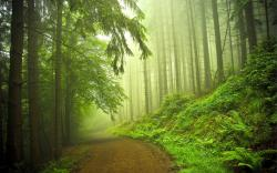 Beautiful Forest · beautiful,nature,forest road,the nature of,tree,green,forest