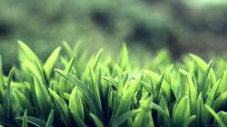Beautiful Grass Wallpaper 10247