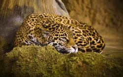 Beautiful Jaguar HD wallpapers