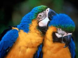 Beautiful Macaw 4847