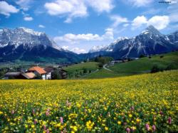 Beautiful Meadow Background 13854