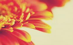 Beautiful Orange Macro Wallpaper 38098