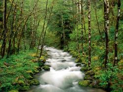 Oregon National Forests Jordans Wallpaper 1600x1200px
