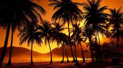 Palm tree sunset beautiful Desktop Wallpaper