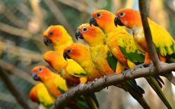 Beautiful Parrot Wallpaper 16052