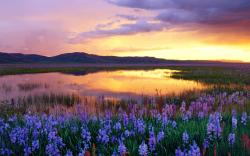 Image: http://www.desktopwallpaperhd.net/wallpapers/11/e/wallpaper-beautiful-prairie-camas-sunset-ftopicp-usa-idaho-window-nature-downever-america-118766. ...