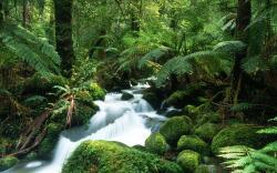 Beautiful Rainforest Wallpaper 24472