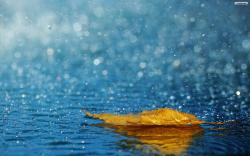 Related Article Rainy Wallpaper :