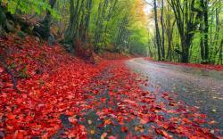 Beautiful Rainy Seasons HD Wallpaper Free Download