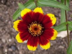 Beautiful Flower Red Yellow HD wallpapers