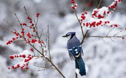 Beautiful Snow Bird Wallpaper