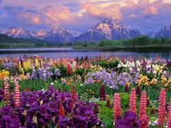 Beautiful Springtime Wallpaper 5243