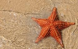 Beautiful and romantic starfish wallpapers 1920x1200 (04). This entry was posted in . Bookmark the permalink.