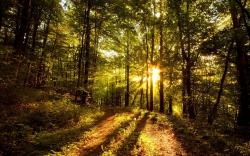 Beautiful Sun Rays Forest Wallpaper Wallpaper
