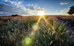 Beautiful Sunbeam