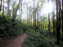 Kelly JohnsonIt'll be beautiful ... this is the Wildwood Trail.