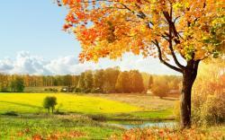Others Beautiful Tree Desktop Wallpapers Download Wallpapers