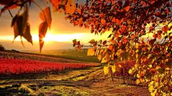 Beautiful Vineyard Wallpaper