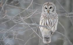 White Owl Tree Wallpaper Px Free Download Wallpaperest 1920x1200px