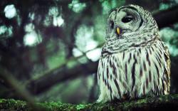 Beautiful White Owl Wallpaper