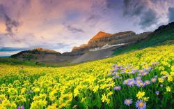 Beautiful Wildflower Meadow Wallpaper