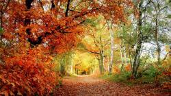 Amazing Woodland Wallpaper