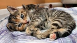 3840x2160 Wallpaper cat, kitten, lying, bed, eyes, look, stripes