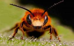 DOWNLOAD: bee-insect-eyes-surface free picture 2560 x 1600