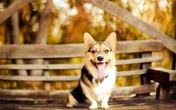 Smiling Bench Dog Look HD Wallpaper