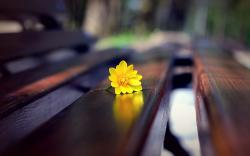 Yellow flower on the bench