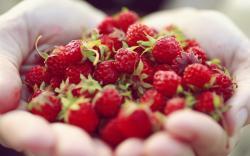 Berries Hands Close-Up