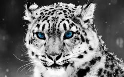 animal backgrounds 14 Cool Backgrounds